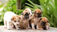 Gruppo di piccoli Cuccioli cane