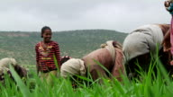 Group of people weeding the crops