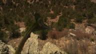 CGI, HA, Group of Pterosaurses  flying above rocky landscape