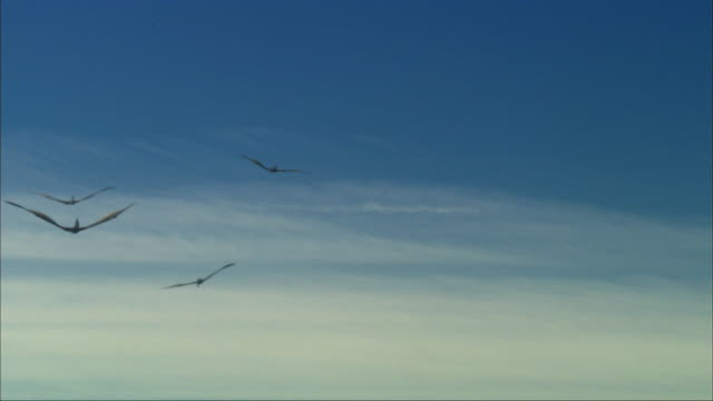 CGI, LA, Group of Pterosaurses  flying against clear sky