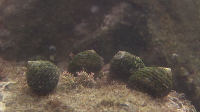 A Group Of Sea Snails Underwater
