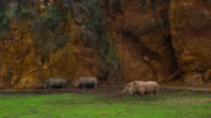A group of White Rhinos in Cabárceno Natural Park, Pisueña Valley, Municipality of Penagos, Cantabria, Spain, Europe