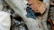 Gruppe der Arbeiter Ameise machen Teamworks für bewegte Schmetterlingsflügel