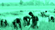 Group of Young Indian Farmer working in the field