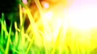 Wachsende Gras