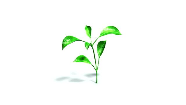 Growing plant on white floor + alpha matte