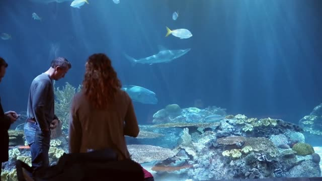 Guests check out the shark exhibit at the John G Shedd Aquarium on October 3 2014 in Chicago Illinois Shedd Aquarium houses 32000 animals and...