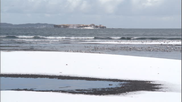 Gulls on snowy coast. Available in HD.