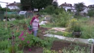 EXT Gvs allotments and people working on allotments / bright coloured scarecrow / man digging / GVs allotments and flowers and vegetables