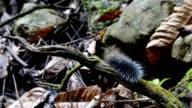 Hairy caterpillar in nature .