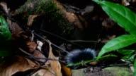 Hairy caterpillar in neture .