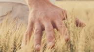 SLO MO mano delicata nel campo di grano