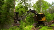 Hand held full shot of feller buncher as it cuts down tree , picks it up, and moves it.