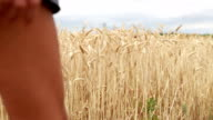 Hand of woman touching the wheat in field enjoying feeling