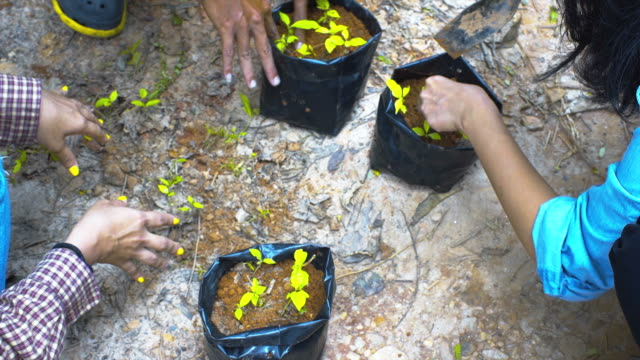 Hand planting a tree