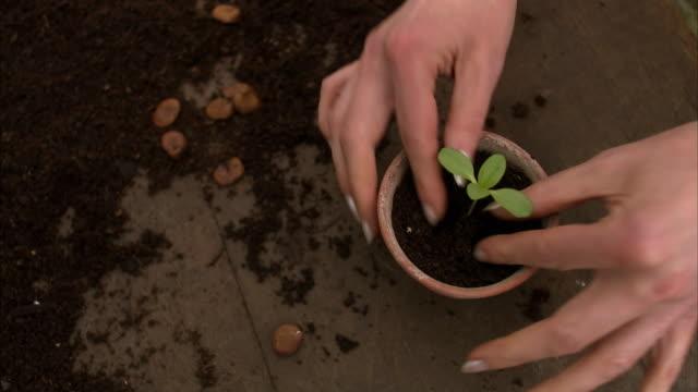 A hand pot  a plant Sweden.