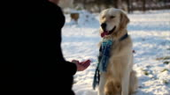 Hand shaking between dog and boy