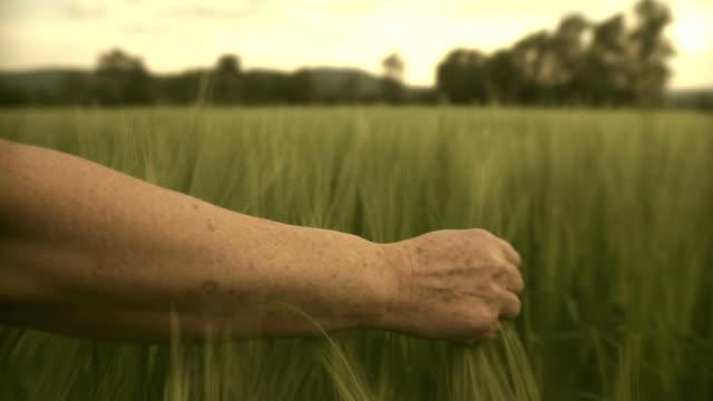 HD: Hand Touching Wheat