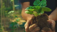 Hands holding a plant, a seedling in soil. Close up with defocus background of a vegetable urban garden patch.