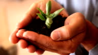 Hands holding a small growing plant