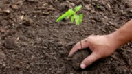 Hands Planting a Seed in Ground