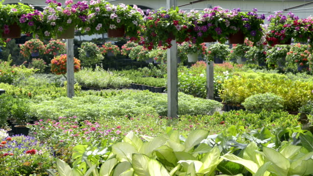 Hanging Basket and plants in a nursery