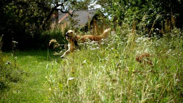 Happy dog running.