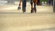 HD SUPER SLOW MOTION: Cavallo Hoofs di cablaggio