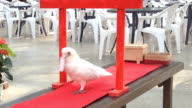 Harumi a parrot in the zoo at the Kobe Port Island does more than squawk for visitors Video was shot on December 31 Japan She is trained to select...