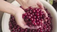 Harvest berries in her hands.