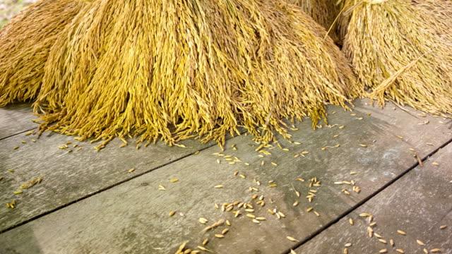 Raccolta di riso su sfondo in legno