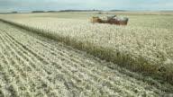 Harvester and Dump Cart Picking Sweet Corn