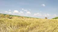 Harvester in der grain-Bereich