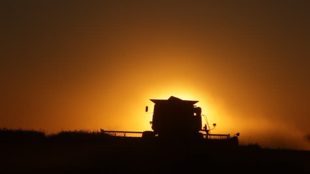 Harvesting at sunset