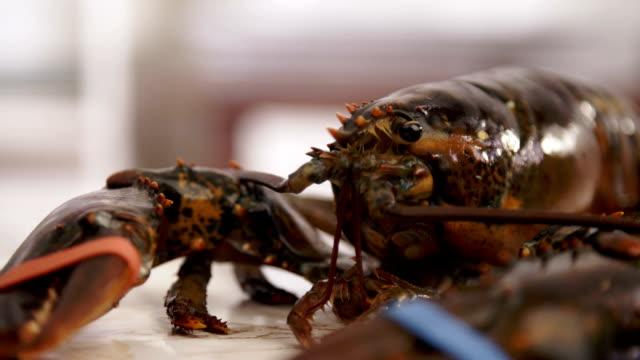 Having Fun in Preparing Fresh Healthy Lobster