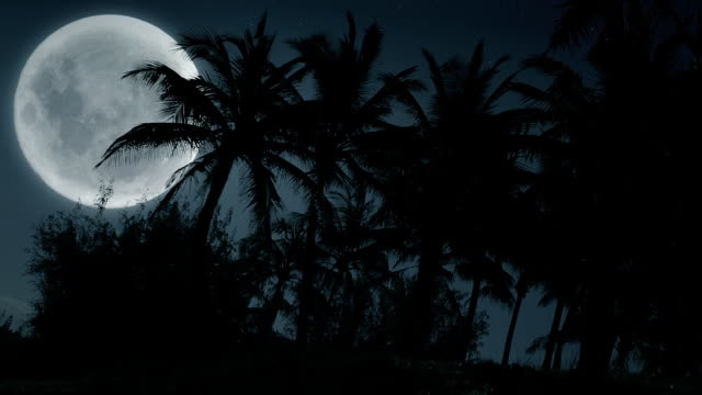 Hawaii Full Moon and Palm Trees