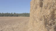 Hay stacks pilled up in field 4
