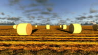 Haybales in a field