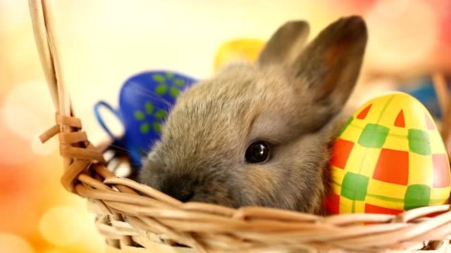 HD1080:Easter bunny