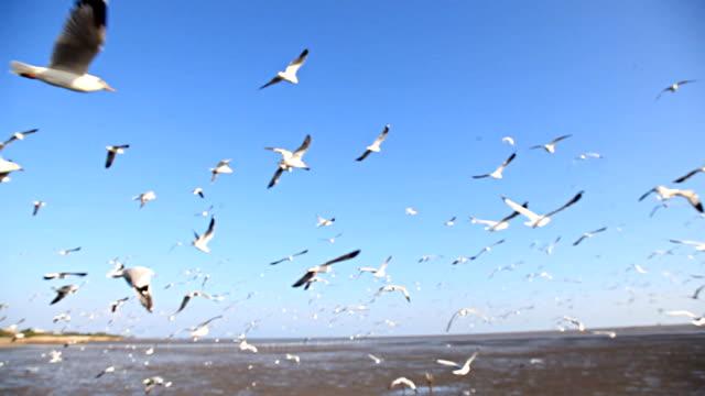 HD:Birds by flying
