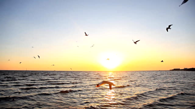 HD:Birds flying on the sea in the evening near sunset.