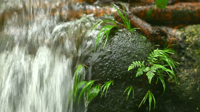 HD:Clean waterfall in nature.