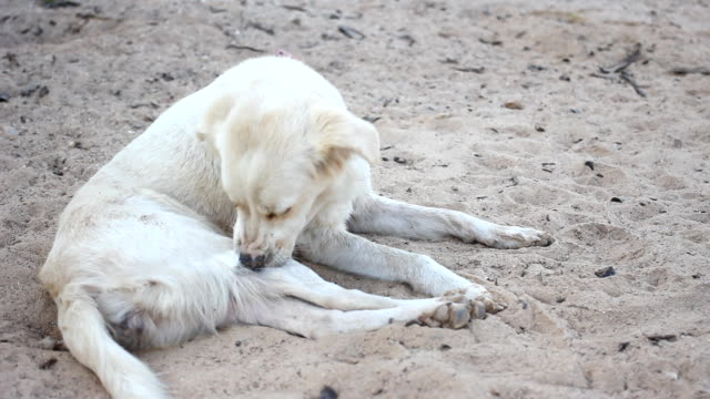 HD :  cane Scratch sua Prurito pelle.
