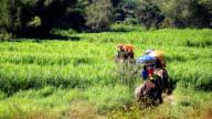 HD:Elephant trekking.
