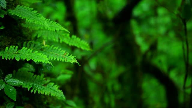 HD:Green fern in nature.(Panning shot)