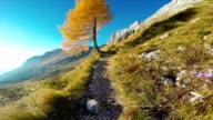 HD-Handheld: Shot of Beautiful Mountain Footpath in European Alps