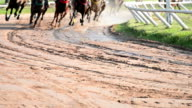 HD:horse race.