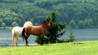 HDi: Horse friendship