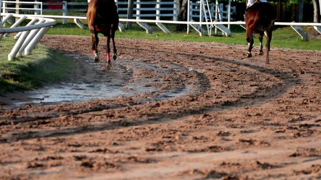 HD:Racehorse