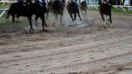 HD-Cavallo da corsa